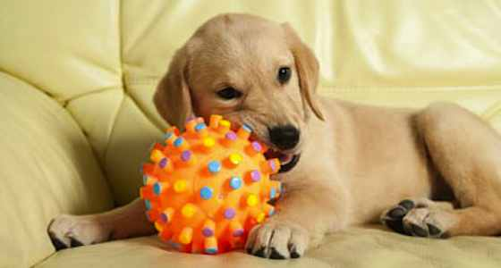 Are Tennis Balls Safe for Your Dog?
