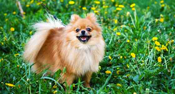 Minimize the Shedding: Essential Springtime Dog-grooming Tips